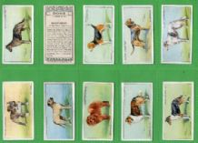 Tobacco cigarette cards Dogs 1937 nicely coloured